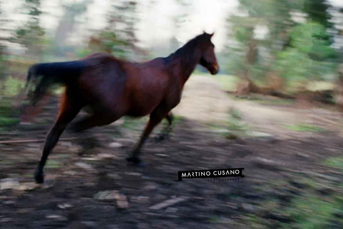 Cavallo libero